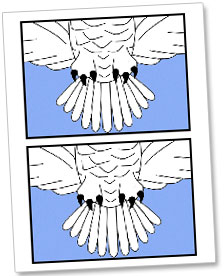 chica made me a new 5 x 7 version and were sharing our harry potter snowy owl printable christmas card download with you so you can also print your own